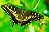 Zanimljive činjenice o leptirima