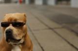 """Banka mu odbila isplatu zbog """"terorističkog"""" imena psa"""