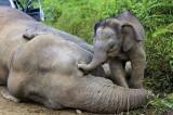 Populacija divljih životinja opala za 60% u zadnjih 40 godina