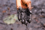 Nejednaka ekološka razmena i Zeleni novi dil