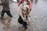 Poplave na jugu Srbije