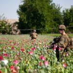 NATO vojnici patroliraju poljima opijumskog maka
