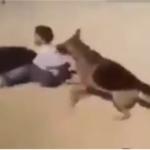 Palestina: Izraelski naseljenici nahuškali psa na dete (VIDEO)