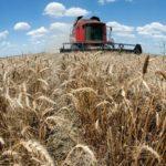 Ukrajinska vlada prihvata GMO, kao deo sporazuma sa MMF-om