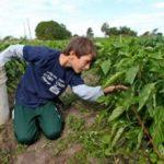 Severnoamerička duvanska industrija izrabljuje dečiji rad