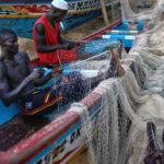 Otimaju hranu iz Afrike da bi hranili stoku na Zapadu