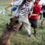 Pustili pse na Indijance koji protestuju protiv izgradnje naftovoda! (VIDEO)