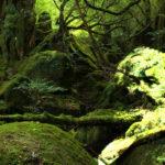 Elizabet i Tor Inge Romoeren – Marks i Ekologija