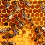 Toksični pesticidi pronađeni u 3/4 svetskog meda