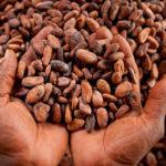 Nestle, Mars i dr. ponovi optuženi za korišćenje dečijeg rada