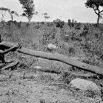 Kaunt Ozi: Četiri stotine godina
